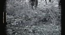 Field 01 (Xabier Iriondo)